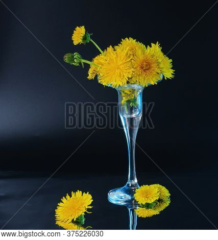 Few Opened And Half Opened Dandelion Flowers In Little Glass Vase With Blue Backlight Located On Dar