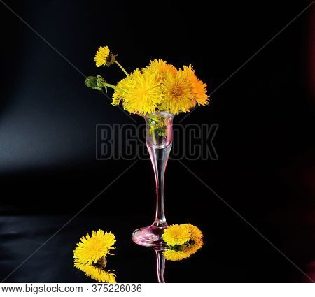 Few Opened And Half Opened Dandelion Flowers In Little Glass Vase With Red Backlight Located On Dark