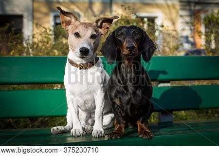 Couple Of Two Dogs Close Together In Love Sitting On A Bank Outdoors At The Park