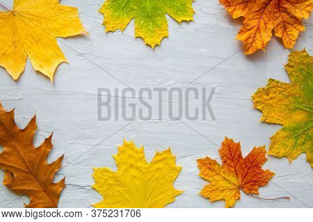 Fall Colorful Leaves On Grey Concrete Background. Space For Text, Copy Space. Thanksgiving Day Holid
