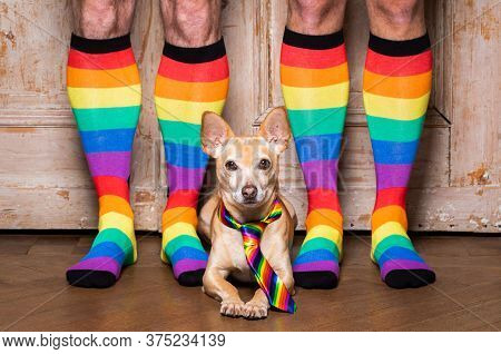 Gay Dog With Owner And Rainbow Socks