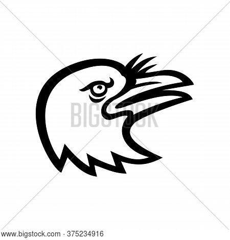Mascot Icon Illustration Of Head Of An American Crow, A Large Passerine Bird Species Of The Family C
