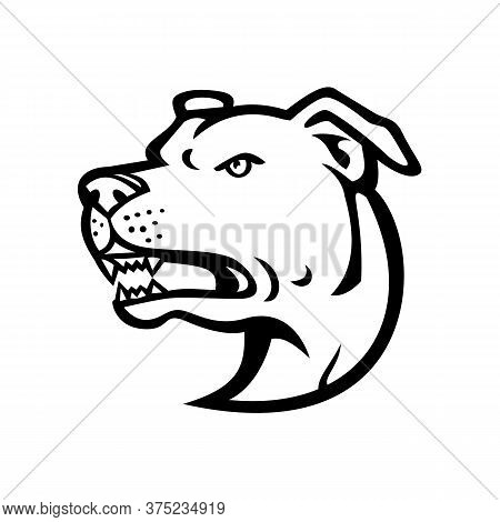 Black And White Illustration Of Head Of An Angry American Staffordshire Terrier Or Amstaff, A Medium