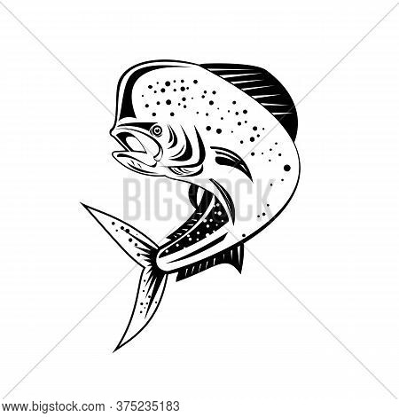 Retro Style Illustration Of A Mahi-mahi, Dorado Or Common Dolphinfish Coryphaena Hippurus, A Surface