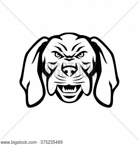 Black And White Mascot Illustration Of Head Of An Angry And Aggressive Hungarian Or Magyar Vizsla Sp