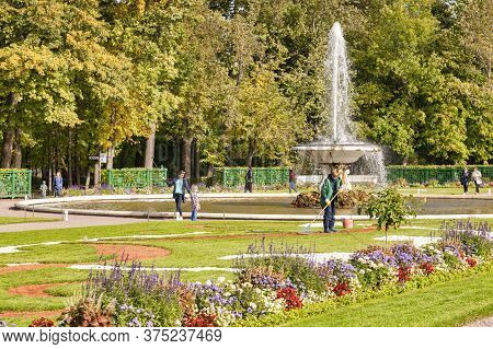 18 September 2018: St Petersburg, Russia - Gardener Raking Gravel In Peterhof Palace Fountain Garden