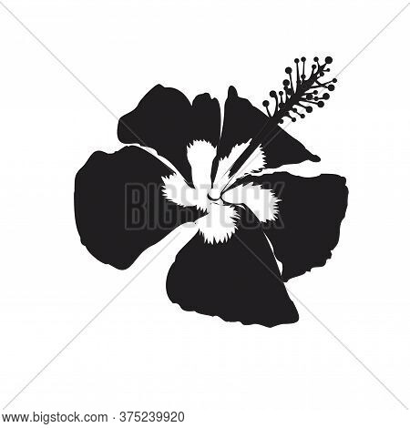Hibiscus Flower Illustration For Drawing Logo Symbol Silhouette