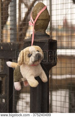Fluffy Puppy Toy Left On The Fence. Homeless, Helpless