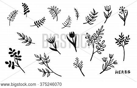 Hand Drawn Vector Collection Of Herbs. Doodle Floral Element. Spring And Summer Symbol. Contour Otli