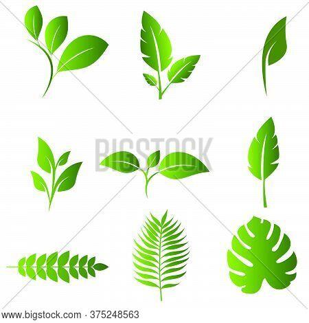03-leaf Nature Design Set Vector