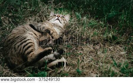 Cat Lies In The Grass.cat Lies In The Grass