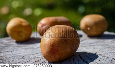 Potato Root Vegetables Lie On A Wooden Surface In The Open. Cooking Food.