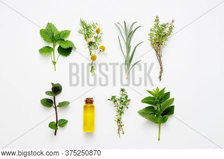Bottle of essential oil with herbs arranged on white background.Alternative medicine concept.