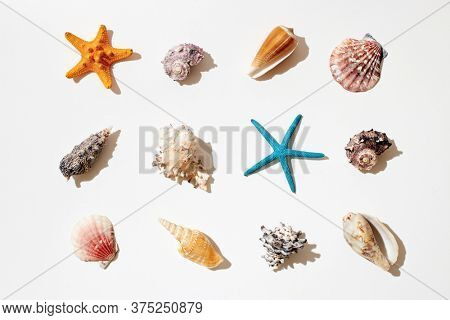 Selection of sea shells and star fish on white background.
