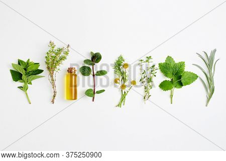 Bottle of essential oil with herbs arranged on white background.