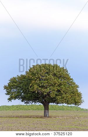 Single tree in countryside