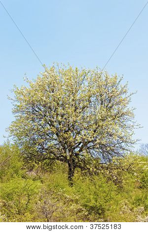 Tree with spring leaves