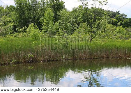 Lakeside Lush Trees Reflection On Water With Blue Sky