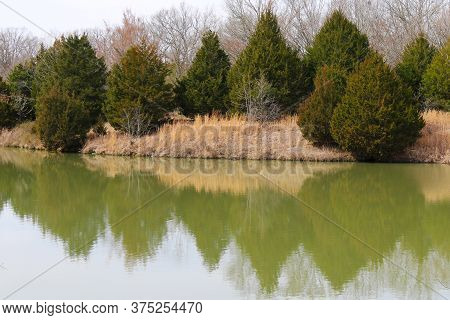 Fall Pine Trees Casting A Reflection On A Calm Lake Scene
