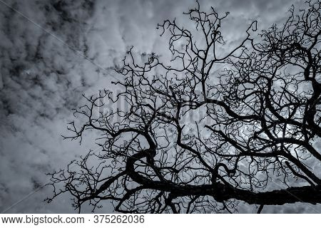 Silhouette Dead Tree On Dark Dramatic Sky And White Clouds Background For Peaceful Death. Despair An