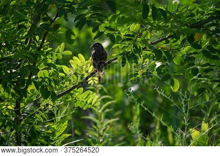 A Solitary Bird Sitting On A Branch Protected By Leaves.
