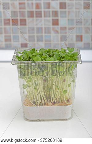 Fresh Edible Healthy Watercress Salad In Box