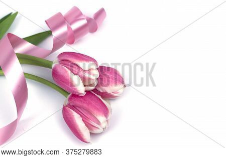 Tulips In A Field Of Tulips. Bright Tulips. Colorful Tulips Flower In The Garden. Beautiful Tulips O