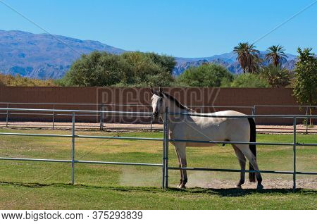 Photo of Horse confined in ranch