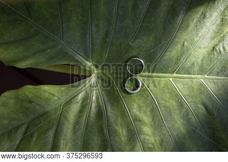 Wedding Ring On Green Leaves