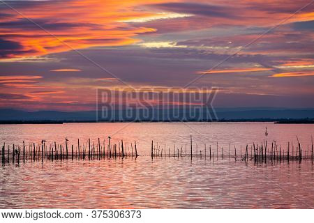Silhouette Of Birds Standing On Poles At Dusk In The Albufera In Valencia, A Freshwater Lagoon And E