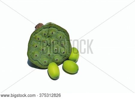 Nelumbo Nucifera Or Indian Lotus Head With Seed Isolated On White Background With Copy Space For Tex