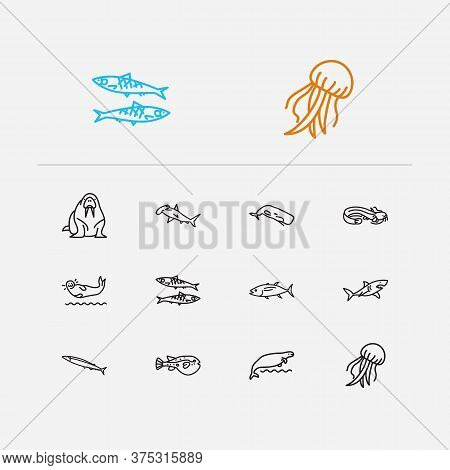 Fish Icons Set. Sardine And Fish Icons With Sheatfish, Walrus And Sea Cow. Set Of Salt For Web App L