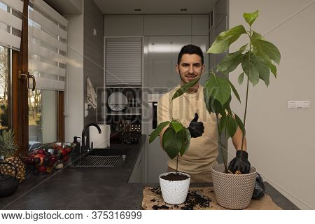 An Attractive Man Transplanted An Avocado Seedling Into A New, Larger Pot. The Gardener Is Engaged I