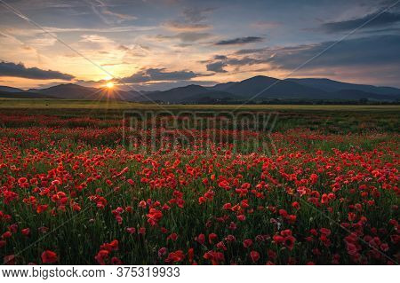 Poppy Field In Region Turiec, Slovakia. Landscape With Sunset Over Poppy Field. Red Petals Poppies I
