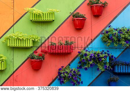 Plants And Flowers In Wooden And Plastic Pots On Colorful Painted Background. Green Wall, Eco Friend