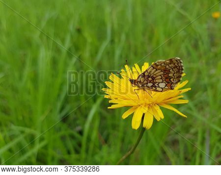 A Closeup Shot Of A Butterfly Sitting On A Yellow Flower