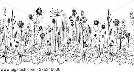 Seamless Horizontal Background With Thistle, Burdock, Wild Herbs And Flowers. Hand Drawn Illustratio