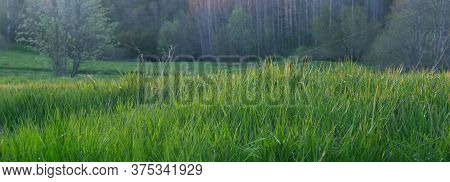 Panoramic Shot Of Nature, In The Foreground Green Grass, Backlit By The Sun, Forest, Trees.ecosystem