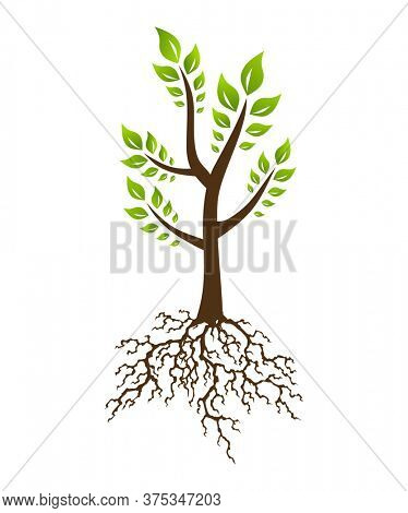 Abstract tree with root. Tree with lush root and leaves. Corporate branding identity design template
