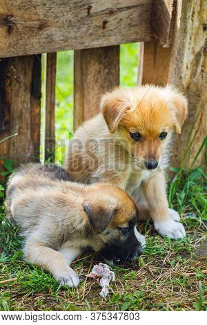 Two Abandoned Stray Puppies Sit On The Grass. Puppy Dogs Waiting In The Dog Shelter. Selective Focus