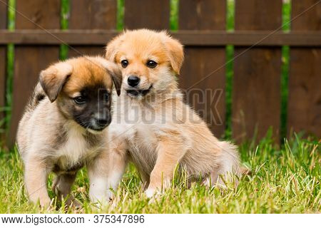 Two Abandoned Stray Puppies Lie On The Grass. Puppy Dogs Waiting In The Dog Shelter. Selective Focus