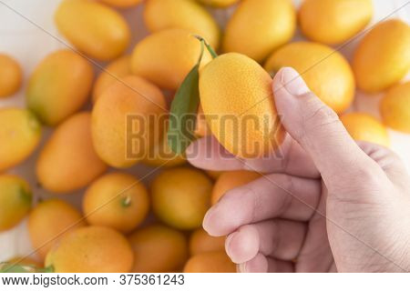Hand Holding A Kumquat, A Small Exotic Citrus Fruit, Over A Background Full Of Them. Top View.