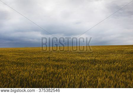 Beautiful Landscape With Wheat Crop Field Cloudy Weather