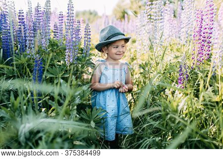 Little Girl In A Hat In Field Of Purple Flowers. A Kid With Lupine Flowers. Field Of Blue Flowers. M