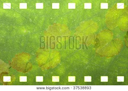 Green nature film strip  for adv or others purpose use poster