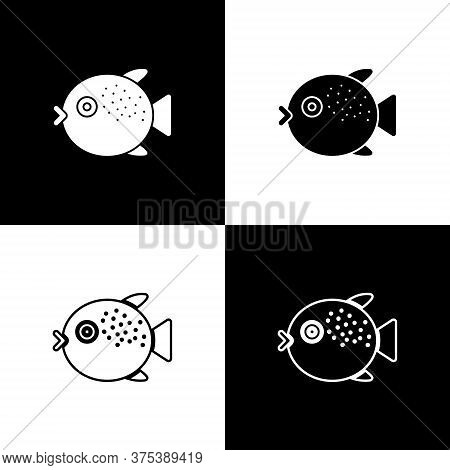 Set Puffer Fish Icon Isolated On Black And White Background. Fugu Fish Japanese Puffer Fish. Vector.