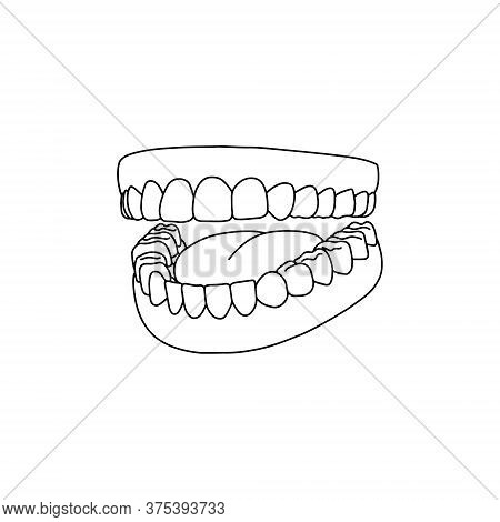 Human Teeth, Outline, Anatomical, Hand Drawn Illustration On White Background. Vector Stock.