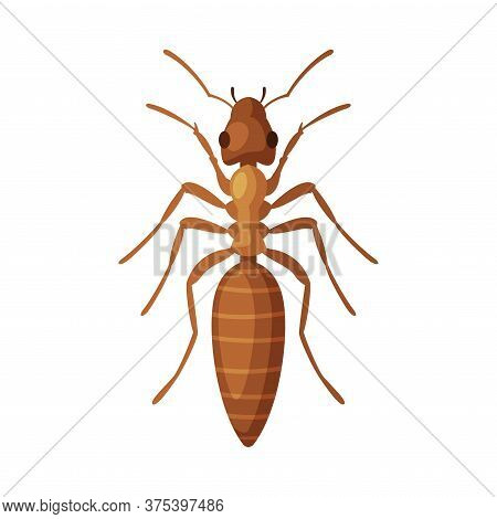 House Ant Insect, Pest Control And Extermination Concept Vector Illustration On White Background