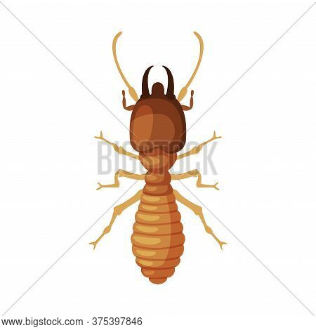 Termite Harmful Insect, Pest Control And Extermination Concept Vector Illustration On White Backgrou