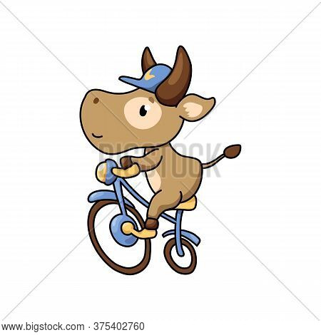 Cute Cow Ride Bicycle. Summer Sport Animal. 2021 Year Lunar Zodiac Animal. Chinese New Year Of Ox. C